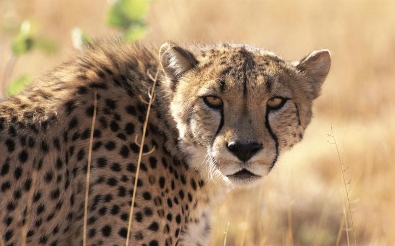 15 photos d'animaux