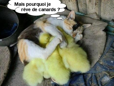 """Pourquoi"" N°5"