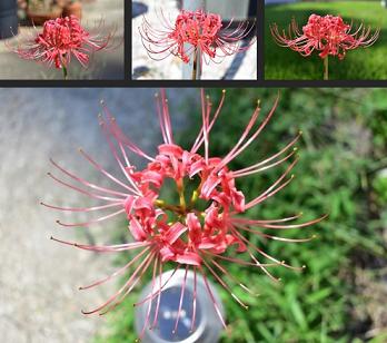 Une jolie fleur ...