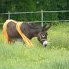 Un âne culotté