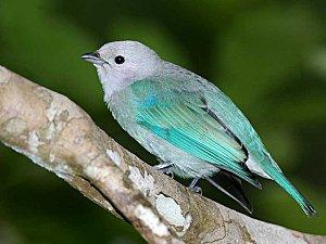 bird-1-wallpaper-1024x768-853745.jpeg