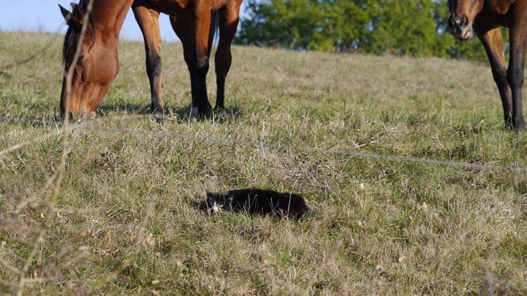Le chat et les chevaux (A & A et Cie n° 64)