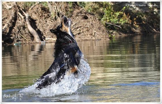 La baignade en rivière, trop bon !