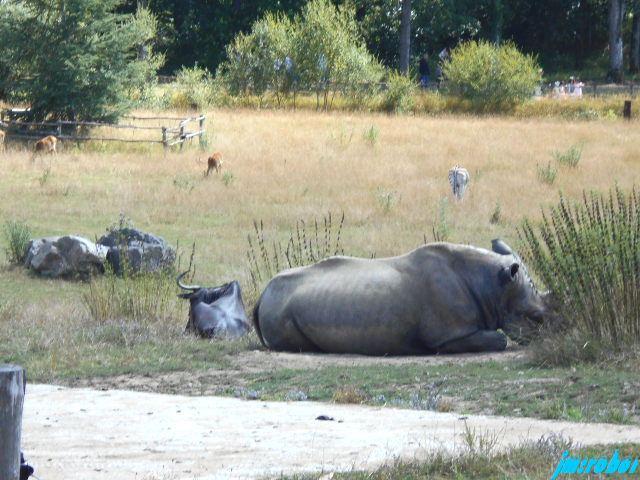 Le Vigen 87 : Une petite balade dans ce beau parc paysager et animalier 2/3