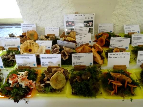 Quelques photos de la superbe exposition 2015, de la Société Mycologique Châtillonnaise  à Châtillon sur Seine !