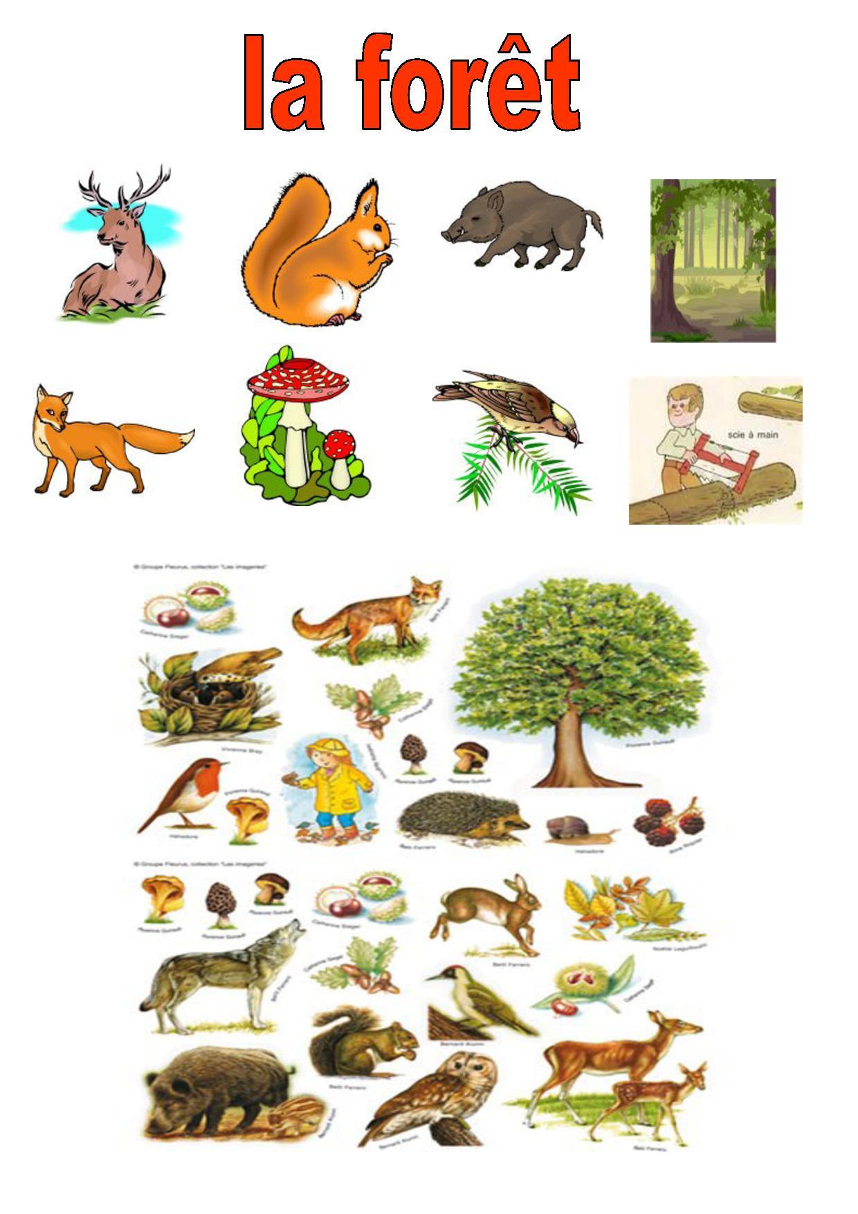 animaux utilisant des outils