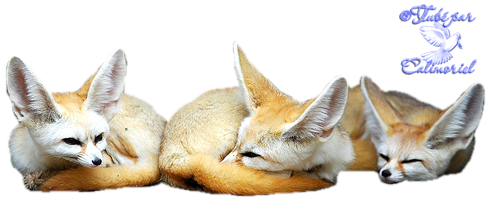 Tubes-Animaux-fennec1