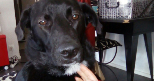(-*♥*-)  Jetée à la rue dans un sac poubelle, cette chienne est devenue le pilier de sa nouvelle famille