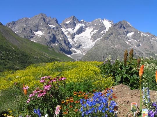 Fleurs montagne