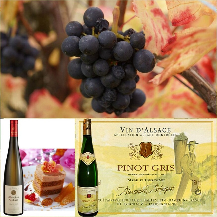 Le Pinot gris