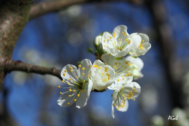fleurs printanières (1)