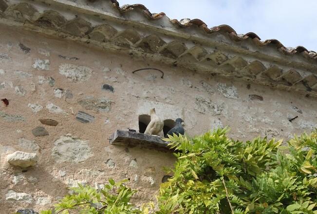 2 Mornac sur Seudre (20)