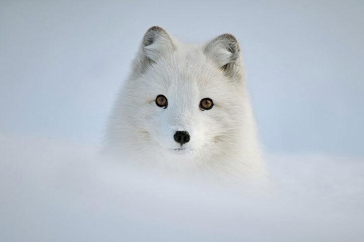 xx-animaux-dont-la-beaute-est-sublimee-par-les-couleurs-hivernales8