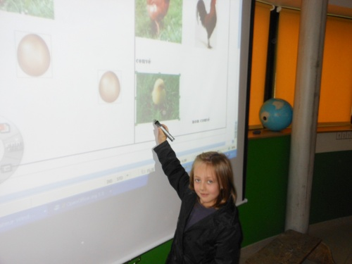 Le casse-tête de la poule, du coq, de l'oeuf et du poussin