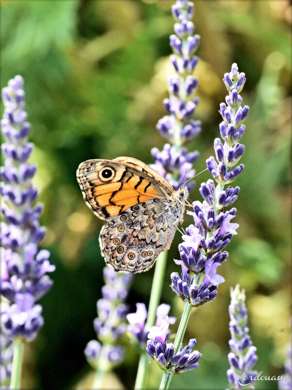 Photos de fleurs et insectes (faune et flore)