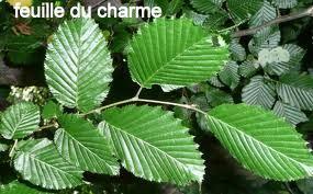 charme1