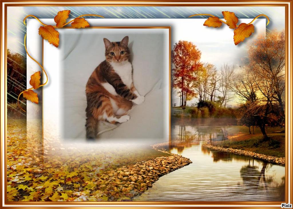 Cadre-paysage d'automne-nature-rivière
