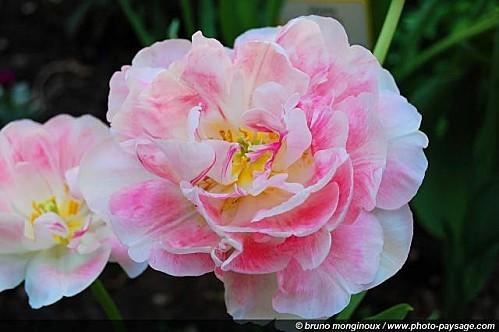 Fleurs printanières 3