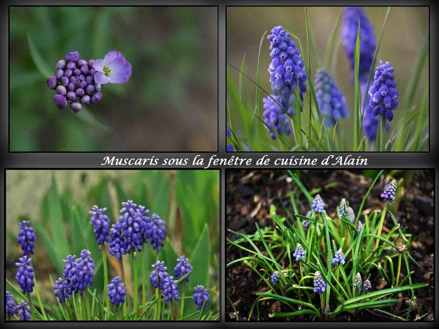 « Le printemps arrive »