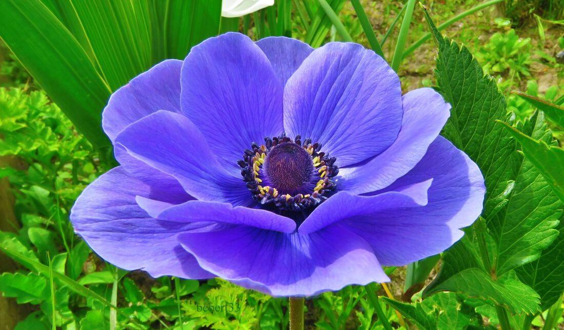 mes fleurs du jardin