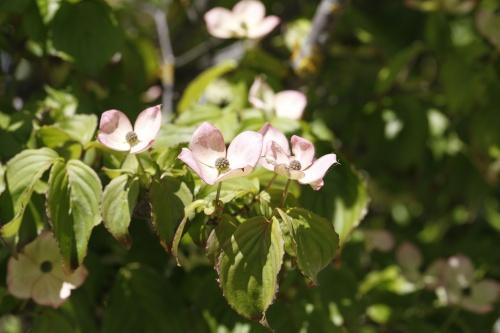 Fleurs suite