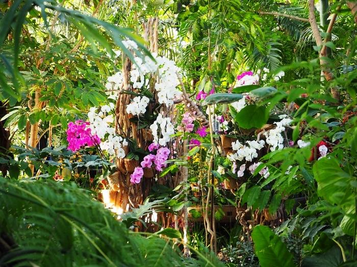 Mille et une Orchidées. Grandes Serres.