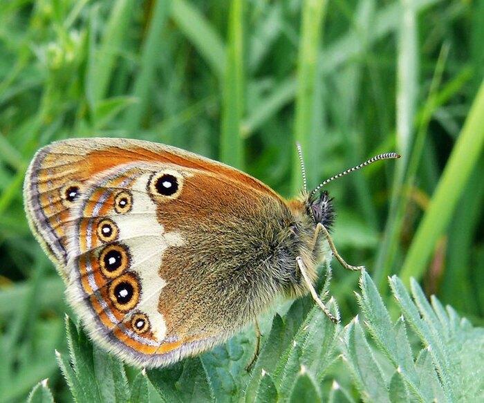 Papillon devinette .....