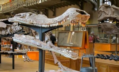 Sarcosuchus 0379
