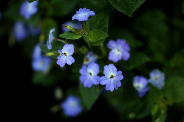 Un jour, une couleur : la vie en bleu
