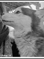 Laska (4 ans)