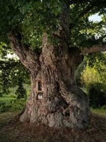 Votez pour votre arbre préféré