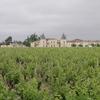 belle demeure au milieu des vignes