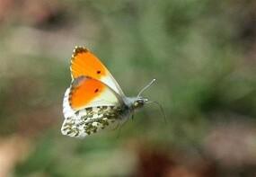 Papillons-38