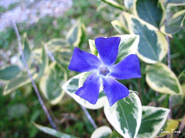 Fleurs-2587.JPG