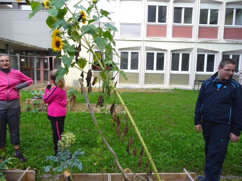 jardin collège lutterbach ulis