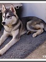 Jaïka (6 mois)