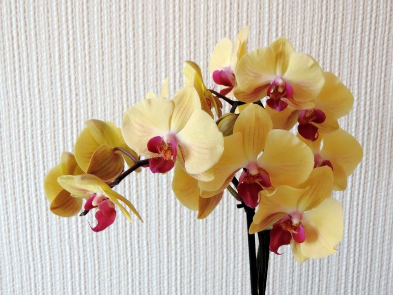 Quelques orchidées...