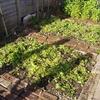 les engrais verts au jardin