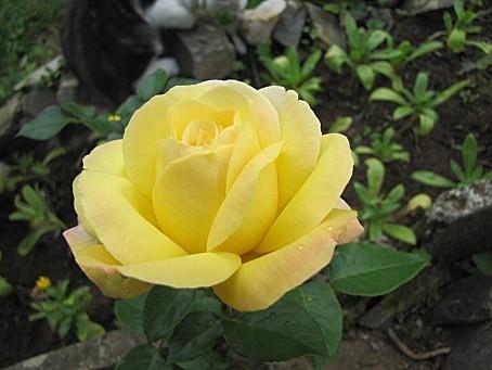 fleurs-5017.JPG
