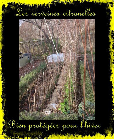 "Au Jardin ""Côté potager"""