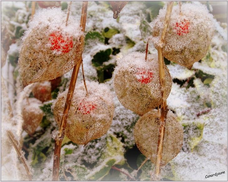 Canicule hivernale inversée