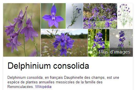 Dauphinelle des champs - Delphinium consolida