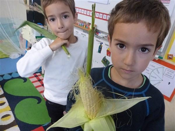 du maïs