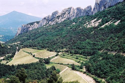 Les dentelles de Montmirail  (Vaucluse)