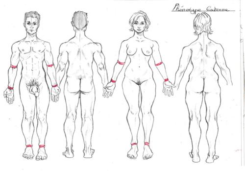 Un peu d'anatomie, ça vous dit?