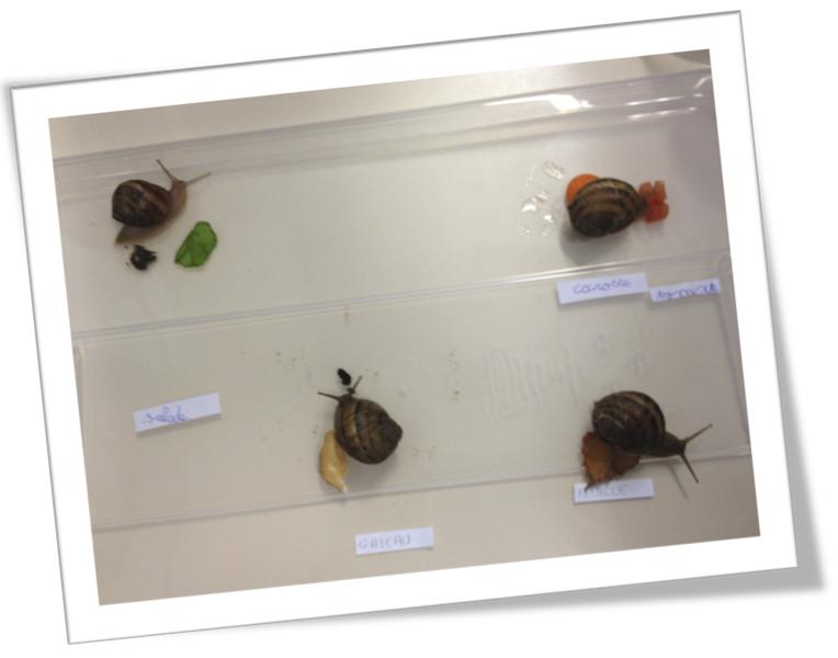 Célèbre Sciences : Les escargots-observations | Bout de Gomme CF73