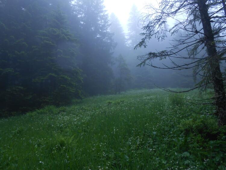 Vosges- le culte des pierres et des sources