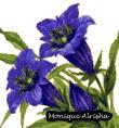 nature59-fleurs-violettes.jpg
