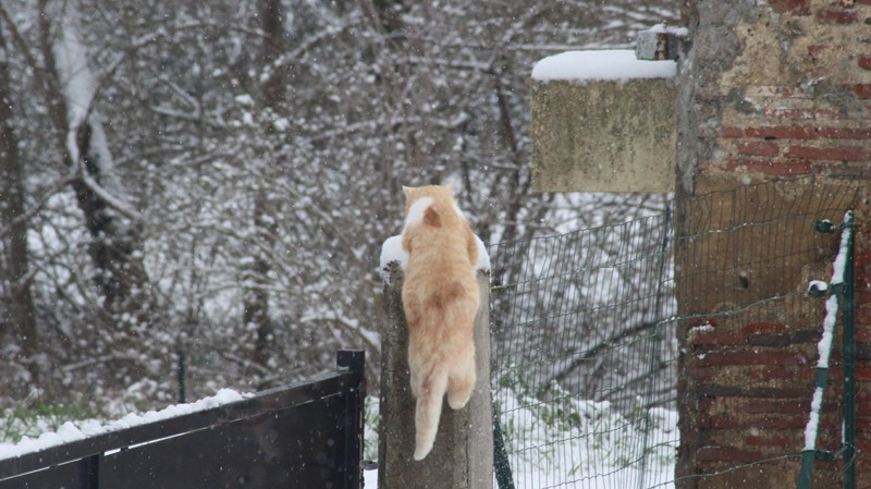 Praline sous la neige