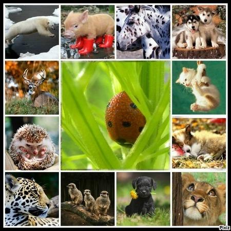 pour les animaux !!!!